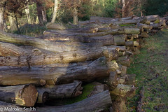 Logs By Three Plank Ride (M C Smith) Tags: eppingforest burywood threeplankride forest pentax k3 trees green wood logs brown stacked cut leaves light shadows moss grass