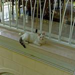 2015-06-08_12-44-27_ILCE-6000_6623_DxO thumbnail