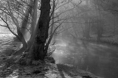 Down by the river (l4ts) Tags: landscape derbyshire peakdistrict whitepeak dovedale riverdove mist tress crepuscularrays blackwhite monochrome frost