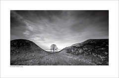 Sycamore Gap (Explored!) (Mike Palmer Fauxtography) Tags: northumberland national park hadrians wall sycamore gap tree outdoor sky clouds long exposure le canon eos 7d efs1022mm f3545 usm lee filters nd grad big stopper landscape mono monochrome bw explored