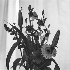 Flowers (Pietro__c) Tags: flowers flower floral window selfdeveloped kodaktmax tmax canona1 rodinal iso800 pushedfilm blackwhite analog canon a1