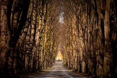 Tree Lined Avenue (dietmargötte) Tags: schönböken lindenallee telephoto landscapearchitecture baumallee alley landscape germany schleswigholstein trees travelphotography canon streetshot avenue norden