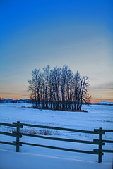 Fickle (stevenbulman44) Tags: tree fence winter alberta ranch canon 70200f28l filter lee ndf color landscape mountain sky lseries blue snow cold outdoor