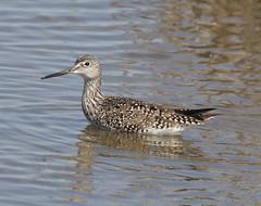 F_031719e (Eric C. Reuter) Tags: birds birding nature widlife nj forsythe nwr march 2019 refuge 031719