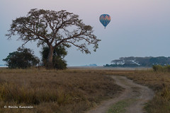 DSC02369 (b-onsafari) Tags: africa zambia kafuenationalpark busangaplains balloon landscape