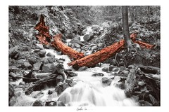 Fallen (g-liu) Tags: park california blackandwhite selectivecolor red log trees artistic monochrome river creek stream water rocks forest landscape outdoor nature naturallight darktable sony a6500 framed february 2019 leaves foliage longexposure 35mm bw