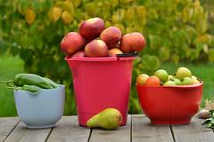 October (Thomas Roland) Tags: fruit vegetables frugt grøntsager sjælland zealand denmark danmark dänemark europe efterår autumn herbst 2018 nikon d7000 europa outdoor home garden have