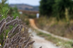 Portuguese dirt road (csanakya) Tags: pentax portugal countryside sigma18125mmf3556dc landscape plants closeup