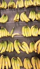 Totally Bananas !! (Gilli8888) Tags: morpeth northumberland morrisons supermarket cameraphone samsung s7 fruit banana bananas yellow food