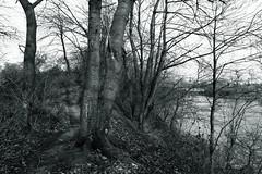 @walking path (Amselchen) Tags: path mono monochrome bnw blackandwhite season earlyspring canon ef2470mmf4lisusm canoneos6dmarkii