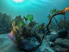 UW Colourful 1 (Terje Helberg Photography) Tags: green underwater uv diving scuba scubadiving padi gopro
