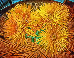 Yellow (Pejasar) Tags: yellow color art artistic table painterly blossoms blooms flowers