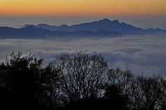 Sea of  clouds beyond Tatajia (mattlaiphotos) Tags: seaofclouds cloud mountains sunset sky silhouette landscape scenery taiwan nightfall twilight dusk nantou 塔塔加 trees
