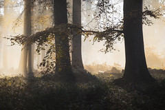 Silence ! (Thomas Vanderheyden) Tags: ambiance atmosphere forest foret nature naturesfinest beautifulearth ngc landscape paysage light lumiere fog brume automne automn fujifilm xt1 thomasvanderheyden colors couleur natur