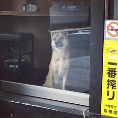 #汪醬 #狗 #dog  #taiwan #taipei (funkyruru) Tags: 汪醬 狗 dog taiwan taipei