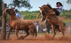 Solé e Turuçu da Siñuelo (Eduardo Amorim) Tags: gaúcho gaúchos gaucho gauchos cavalos caballos horses chevaux cavalli pferde caballo horse cheval cavallo pferd pampa campanha fronteira quaraí riograndedosul brésil brasil sudamérica südamerika suramérica américadosul southamerica amériquedusud americameridionale américadelsur americadelsud cavalo 馬 حصان 马 лошадь ঘোড়া 말 סוס ม้า häst hest hevonen άλογο brazil eduardoamorim gineteada jineteada