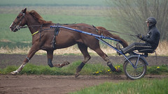 Markhove - A  In the air today (Drummerdelight) Tags: horse rider horserider stal markhove action sweat running