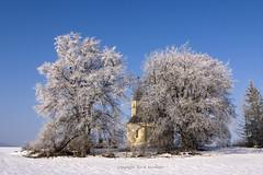 (tozofoto) Tags: europe hungary zala tozofoto canon winter church trees landscape snow lights shadows travelling travel