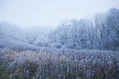 _MG_0452c - 26.12.2018 (hippo1107) Tags: frost gefroren frozen eis schnee ice snow winter dezember december schoden saar eiskalt wald waldweg feld wanderweg seitensprung moselsteig laub blätter baum bäume canoneos70d canon eos 70d