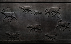 Not being hunted? (PChamaeleoMH) Tags: assyrian britishmuseum exhibition frieze london museum relief