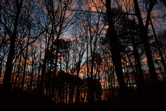 Sunrise 1-17-19 (davidwilliamreed) Tags: sunrise trees silhouettes mybackyard norcrossga gwinnettcounty
