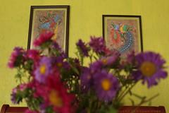 Diversas formas de armonía (George.Photoculture) Tags: flower flowers canon canonphotography camera colors color foto fotografia art arte photography photographer photographers photo picture beautiful