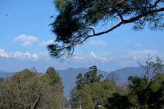 Room with a view. (draskd) Tags: trees hillside mountains himalayas mtnandadevi mtnandakot panwalidwar scenic scenery range snowcapped room windowview roomwithaview