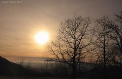 Visione Surreale (- Crupi Giorgio (official)) Tags: italy liguria genova pianidipraglia landscape nature trees sky sun canon canoneos7d sigma sigma1020mm