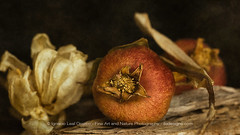 Still life (ILO DESIGNS) Tags: stilllife fineart fotografíadeautor pomegranates indoor studio estudio naturallight texturing naturalezamuerta pictorial pictórica closeup d3300 sigma15028