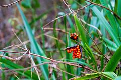 Peak Hill-1-4 (Sheptonian) Tags: somerset rural scenic landscape trees fauna grassland