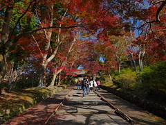京都山科毘沙門堂 (Eiki Wang) Tags: 京都 毘沙門堂 山科 kyoto yamashina 楓 紅葉 momiji