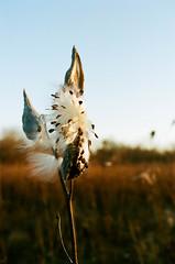 Edit -1-3 (Dane Van) Tags: nature goodprana minolta x700 kodak portra portra400 35mm18 35mm film