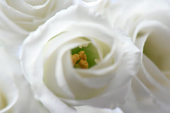 White Flowers (pasquale di marzo) Tags: flowers nikon nikkor interno colore fiori sfocato 2019 unning