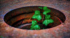 new life, born in a rusty hole HMM (petermüller21) Tags: hmm macromonday hole