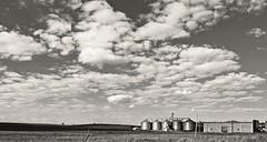 6D_IMG_0875_ON65 copy_PC (A. Neto) Tags: tamron28300divcpzd tamron eos copyrightcaneto canon6d canon 6d blackwhite bw monochrome landscape plantation countryside rural skyline clouds