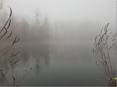 Zénitude sur les bords de l'étang (Instant_T) Tags: zen wild wildphotography photonature naturephotography nature natureshot paysage eau etang étang brume zenitude hiver hivernal blanc gris roseau pics zenpicture