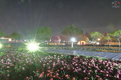 溪州公園-花在彰化 (~金玉~ Y.C.CHEN) Tags: canon color 7d beautiful flower green light night