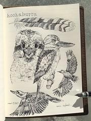 Kookaburra (schunky_monkey) Tags: fountainpen penandink ink pen journal sketchbook drawing draw sketching sketch nature illustration art flying feathers beak birds bird australia kookaburras kookaburra