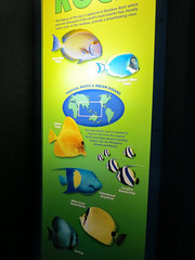 Fish Of Rainbow Rock Sign. (dccradio) Tags: myrtlebeach sc southcarolina horrycounty nature rainbowrock ripleys ripleysaquarium aquarium fish swim swimming indoor indoors inside canon powershot elph 520hs colorful color february winter monday afternoon mondayafternoon goodafternoon water tropicalpacific indianocean tang dussemertang powderbluetang longfinbannerfish yellowtang yellowbandangelfish milletseedbutterflyfish batfish