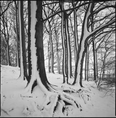 the other end (steve-jack) Tags: hasselblad 501cm 50mm cfi kodak trix 400 film 120 6x6 medium format perceptol snow woods forest uk trees epson v500