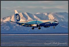 N512AS Alaska Airlines Dreamliner Livery (Bob Garrard) Tags: n512as alaska airlines dreamliner livery boeing 737 anc panc