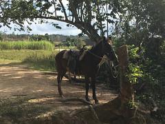 Viñales 2019 (Galince Travel) Tags: cuba viñales february2019 naturelovers campo travel