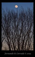 Worm Moon 19MAR2019 (8119) (fbc57) Tags: moon supermoon moonrise wormmoon landscape astronomicalevent astronomy astrophotography vermont nikond850 nikon200500f56eedvrafs ethanallenhomestead burlington winooskiriver trees