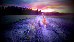 sunset with Hammy 7:21 pm (sugarelf) Tags: petfriendship hammy cat friends familycat pet sunsetgreetings pacificnorthwest familypet countryside catportrait