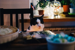Dinner guest (ewitsoe) Tags: autumn street warszawa winter erikwitsoe erikwitsoecom holidays poland warsaw cat pet kitty kitten louis home party festive dinner table badkitty male