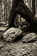 Baum und Felsen im Bayerischen Wald