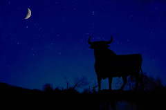 Noche Estrellada (JCMCalle) Tags: sky landscape jcmcalle image toro bull estrellas stars photohoot fhotografy photofrapher nofilter naturaleza nature naturephotography nofilters luna moon cielo