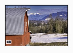 Barn with a View (robinlamb1) Tags: barn landscape mountain tree horse snow field farm sky