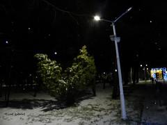 Snow in Bazilescu Park, Bucharest (cod_gabriel) Tags: bazilescu park parc parculbazilescu bazilescupark bucharest bucarest bucareste bukarest boekarest bucuresti bucureşti romania roumanie românia snow zapada zăpadă ninsoare ninge night noapte
