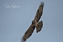 IMG-20180114-WA0009 (TARIQ HAMEED SULEMANI) Tags: sulemani tariq tourism trekking tariqhameedsulemani winter wildlife wild birds nature nikon